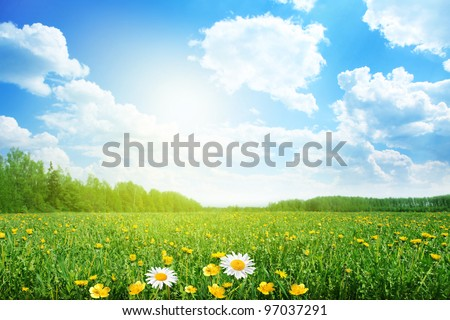Summer meadow on bright sunny day. - stock photo