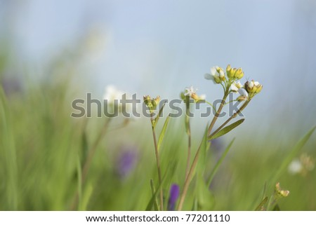 Summer meadow, vibrant colors and flowers, copy space in the photo - stock photo