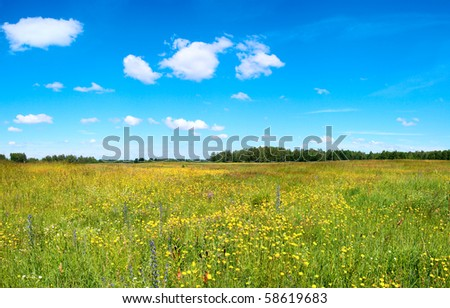 Summer meadow with blossoming wildflowers.