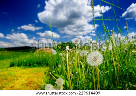 Summer meadow with dandelion flowers in the foreground - stock photo