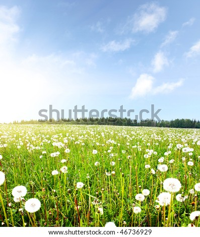 Summer meadow with dandelions and blue sky with clouds - stock photo