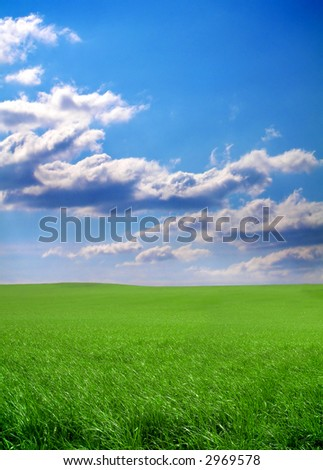 summer meadow with fresh green grass and a blue sky - stock photo
