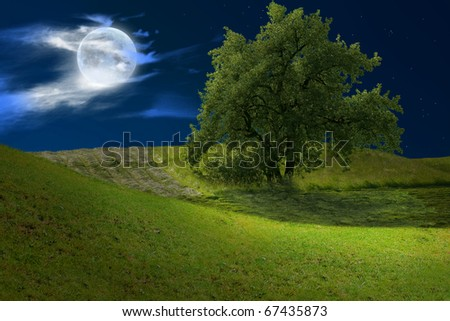Summer-meadow with fullmoon