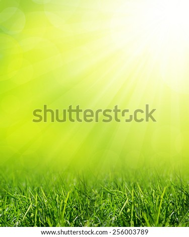 Summer meadow with green grass - stock photo
