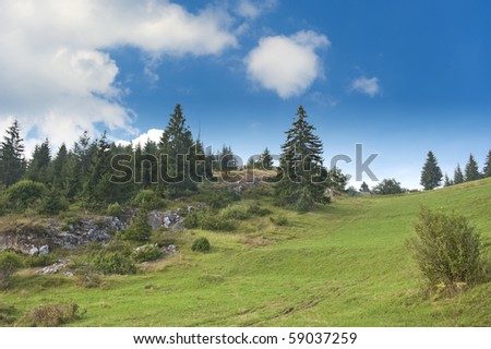 Summer meadow with pine trees on summer day