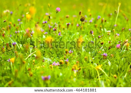Summer meadow with various types of flowers.
