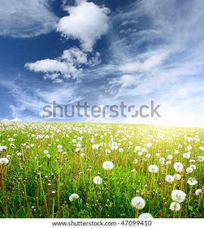 Summer meadow with wild dandelions and blue sky with clouds