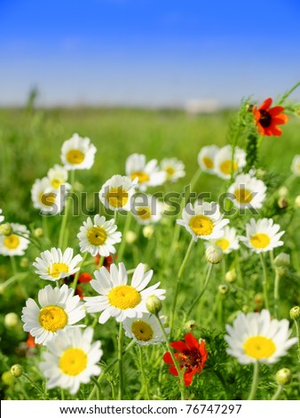 Summer meadow with wildflowers - stock photo