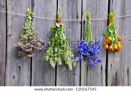summer medical herbs bunches on old  wooden wall - stock photo
