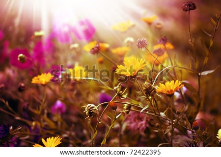 summer morning - stock photo