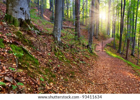 Summer morning in mystical woods - stock photo