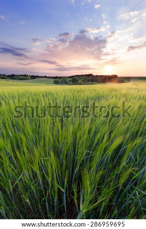 Summer morning in the agrarian field - stock photo