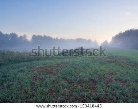 summer morning meadow - stock photo