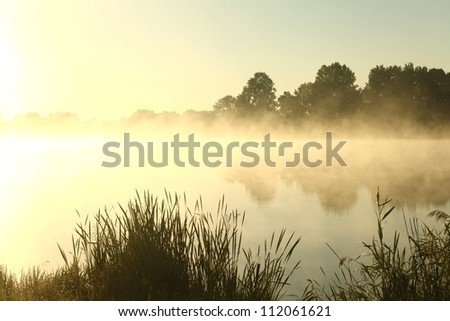 Summer morning on the edge of the lake. - stock photo
