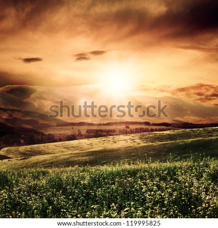 Summer morning on the meadow, natural backgrounds - stock photo
