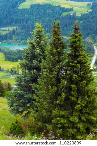 Summer mountain country view with three firs in front. Two shots composite picture.