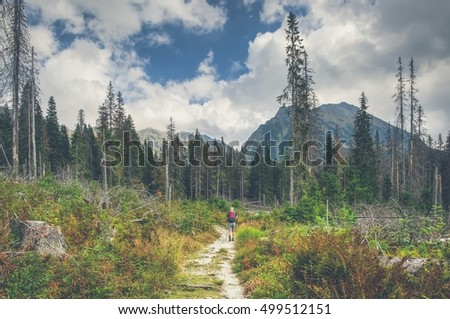 Summer mountain landscape. Mountain trail in beautiful summer scenery in High Tatra, Slovakia.