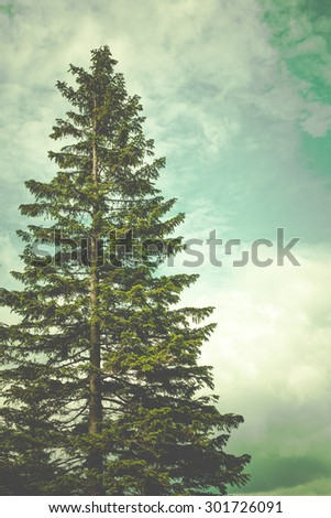 Summer mountain landscape with big fir tree - stock photo