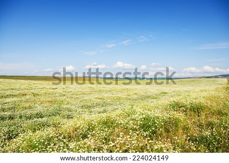 summer mountains meadow. Nature composition.    - stock photo