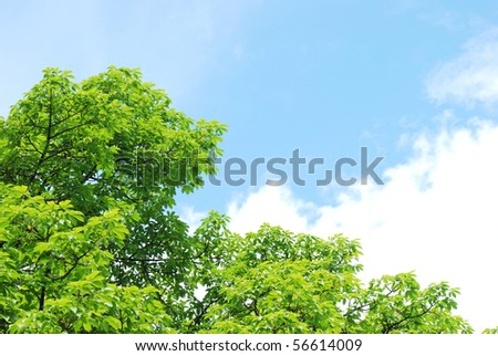 summer nature leaf close up - stock photo