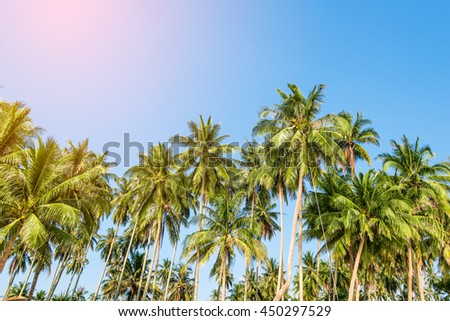 Summer nature scene. coconut palm trees with sky