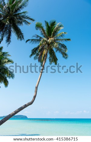 Summer nature scene. Tropical beach with sea wave on the sand and palm trees