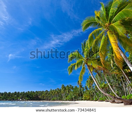 Summer nature view with palm trees on the beach near the sea under blue sky. - stock photo