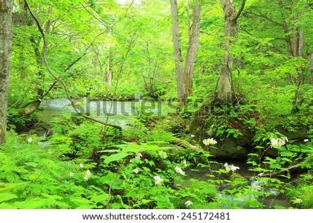 Summer of Oirase Stream, Aomori, Japan  - stock photo