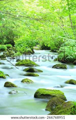 Summer of Oirase Stream, Aomori, Japan  - stock photo