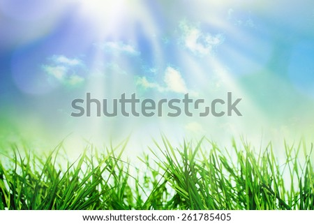 Summer or spring growing nature background with grass and flowers - stock photo