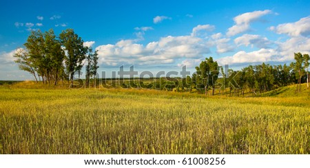 summer panoramic landscape with field and woods - stock photo