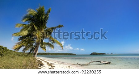 Summer panoramic landscape with palm trees, blue sky and clear ocean water.  Taken in tropical paradise of Bahia Honda Key in Florida, USA.