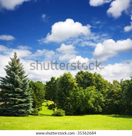 summer park, trees - stock photo