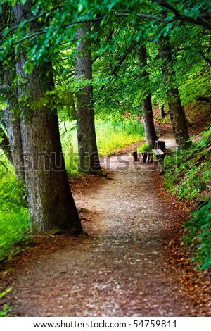 Summer path in the forest - stock photo