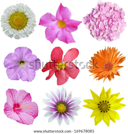 Summer perennial flower set isolated on white