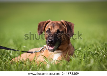 summer photo of dog lying on the grass - stock photo
