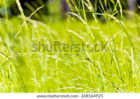 Summer picture of green saturate grass texture - stock photo