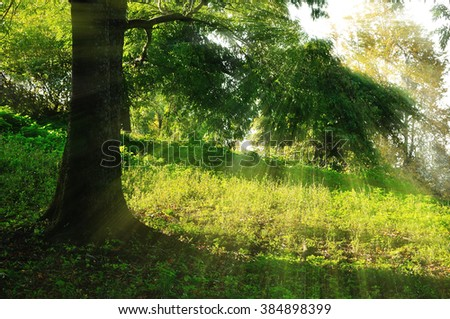 Summer picturesque landscape - sunrise in the park  with bright sunbeams breaking through the tree branches - stock photo