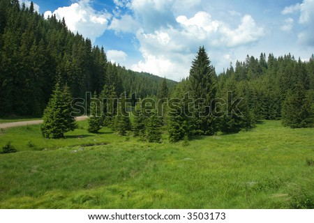 Summer pin tree forest landscape with storm clouds - stock photo