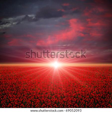 Summer poppies field at sunset - stock photo