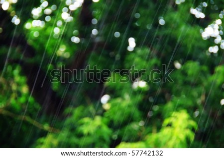 Summer rain on a background trees - stock photo