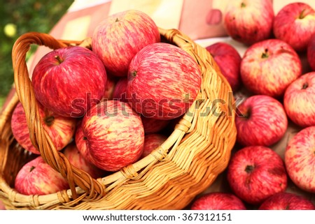 summer red apples in the basket on the green garden bakckground - stock photo
