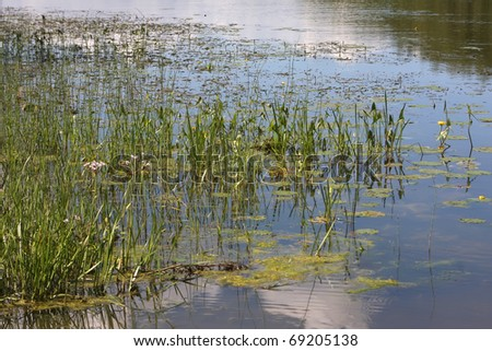 Summer reflections in the water - stock photo