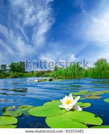 summer river landscape - stock photo