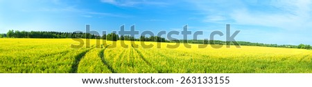 summer rural landscape a panorama with a yellow field and the blue sky. agriculture - stock photo
