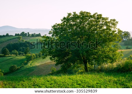 summer rural landscape, trees, hills and fields, - stock photo