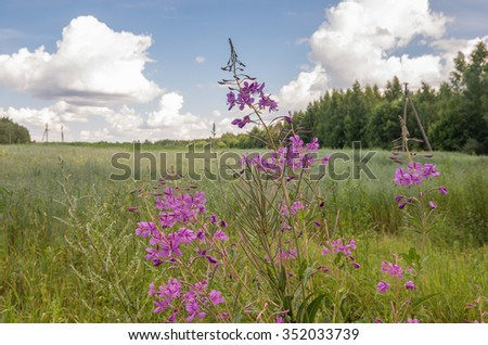 Summer rural landscape with field and forest in the Pskov region, Russia.