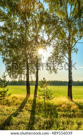 summer rural landscape with sunrise, field and  forest