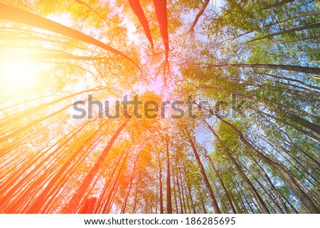 summer's forest in a clear day - low angle view - stock photo