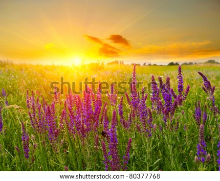 Summer scene in steppe on sunset background - stock photo